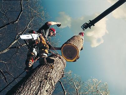 Stihl manufactured chainsaws