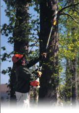 Danbury Ct Gas Tree Pruner