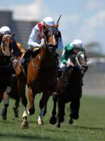 Video Horse Racing Games For Rent in San Antonio