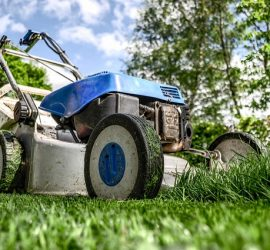 Types of Weeds That Kill Lawn